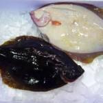 冬旬(ふゆどき)の江戸前高級鮮魚